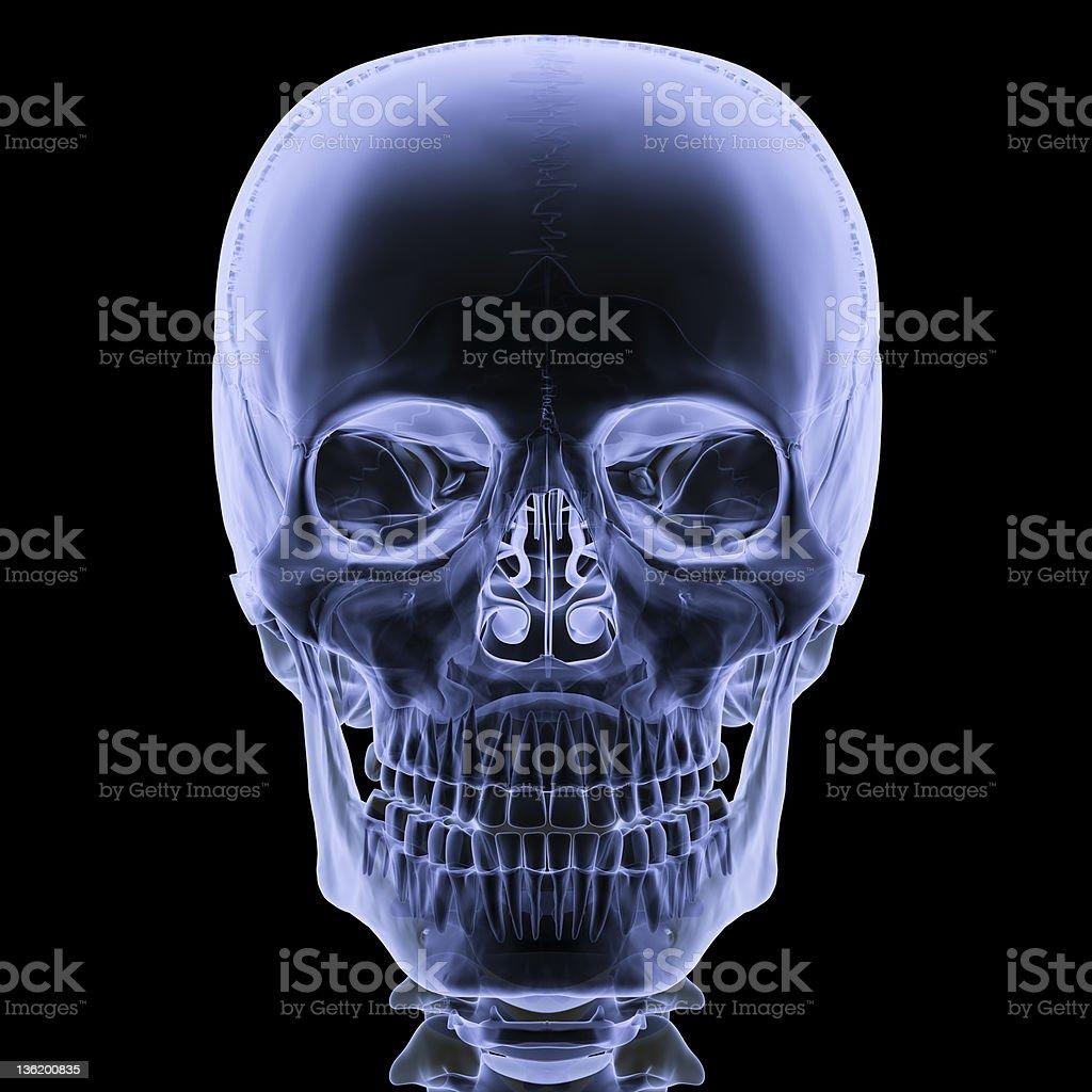 X-ray skull front view vector art illustration
