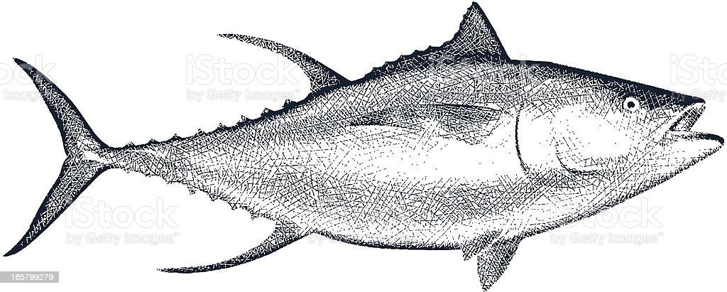 Yellow Fin Tuna royalty-free stock vector art