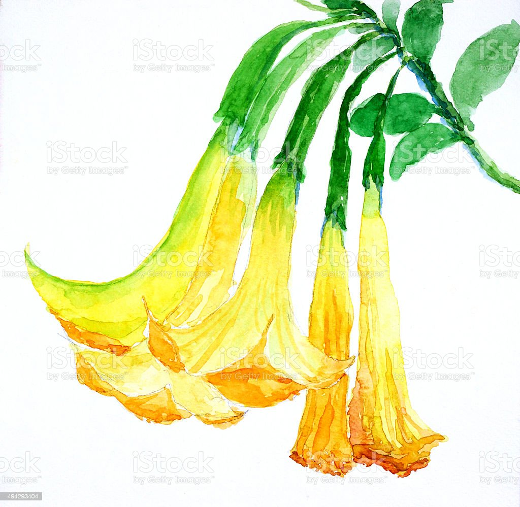 yellow flowers ' watercolor painted vector art illustration