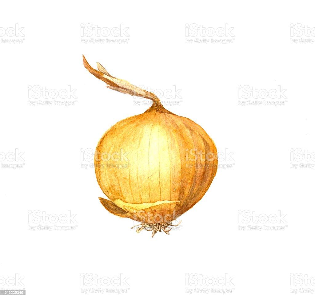 yellow onion bulb vector art illustration