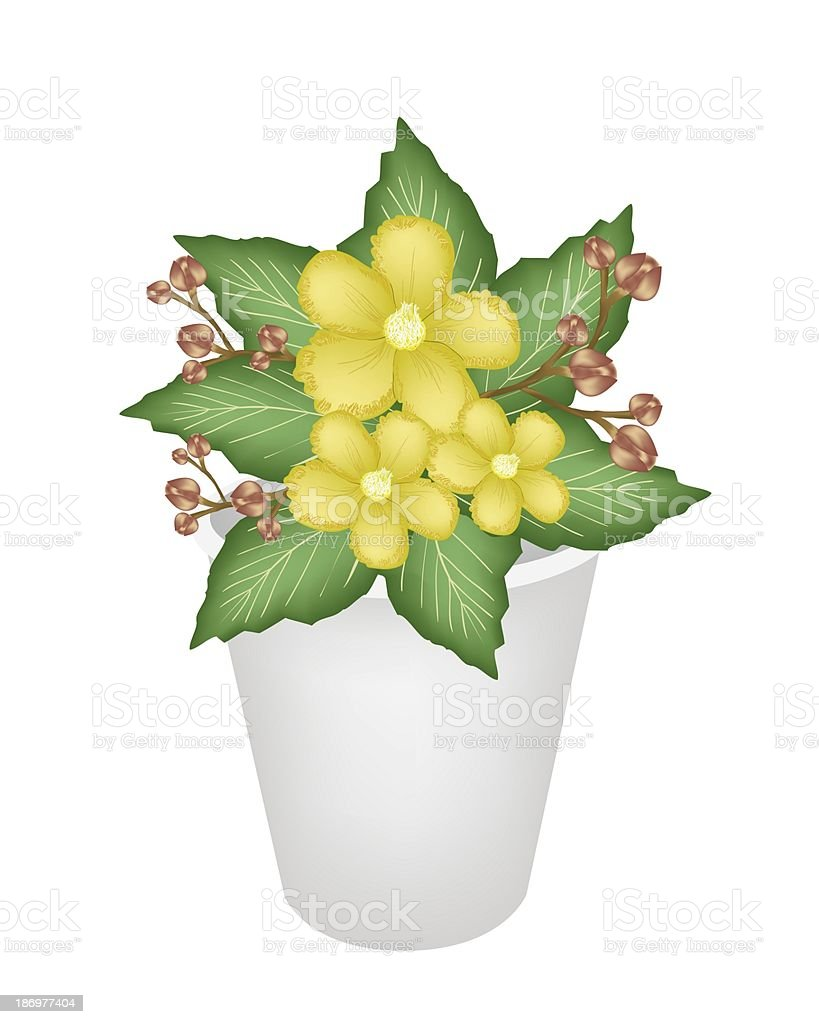 Yellow Simpor Flowers in A Flower Pot vector art illustration