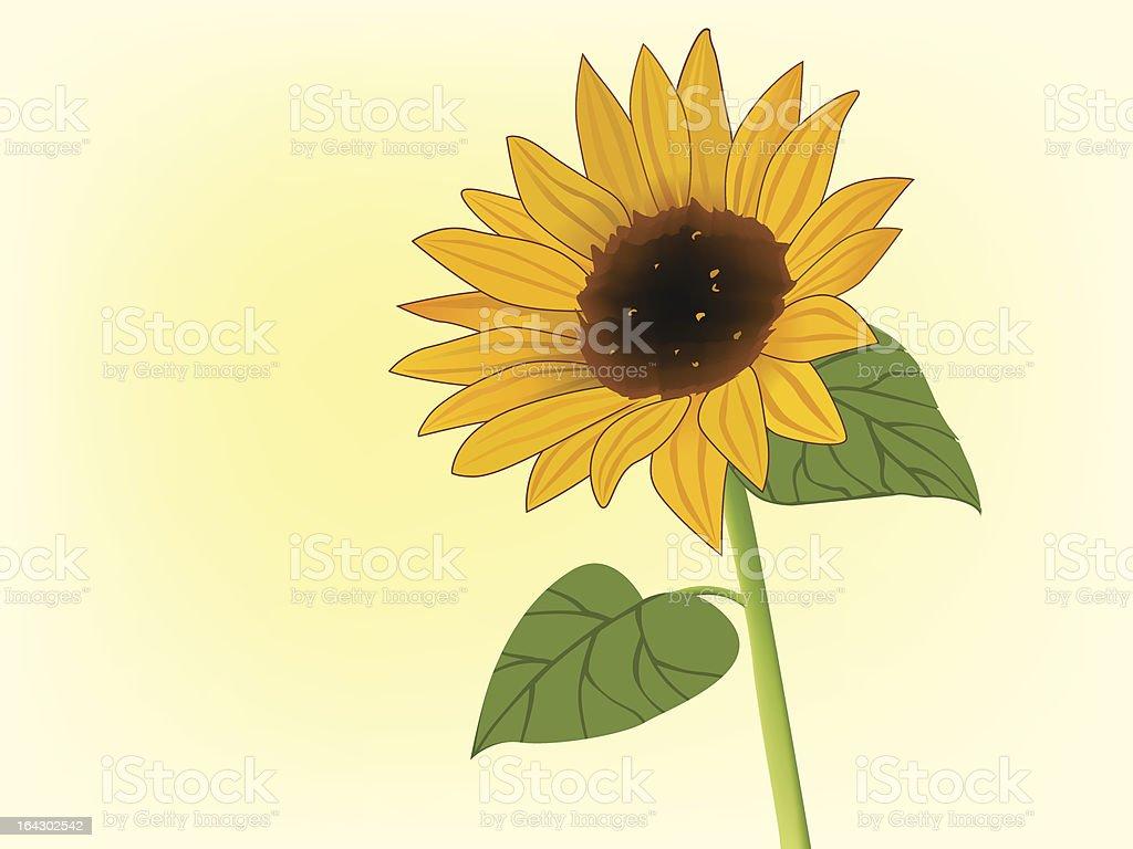 Yellow sunflower in bloom vector art illustration