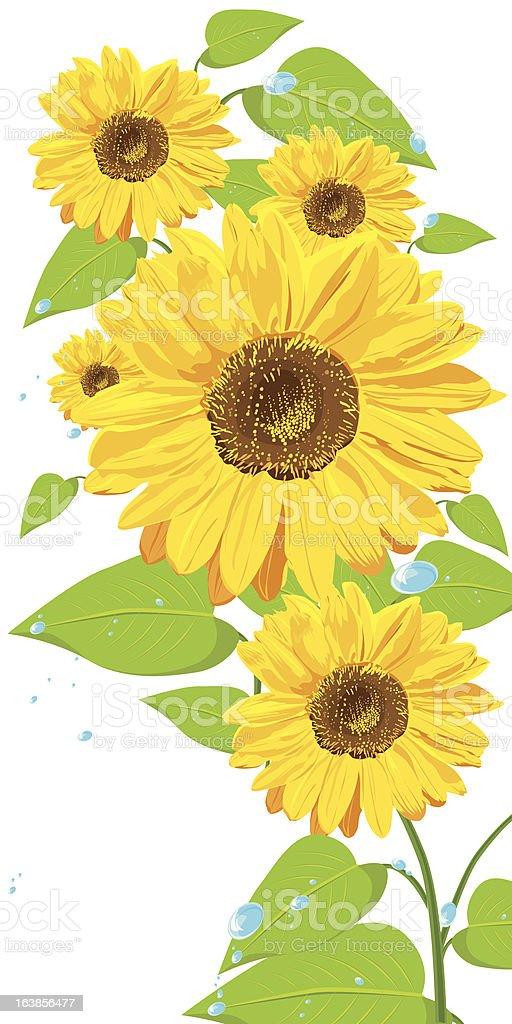 yellow sunflowers royalty-free stock vector art