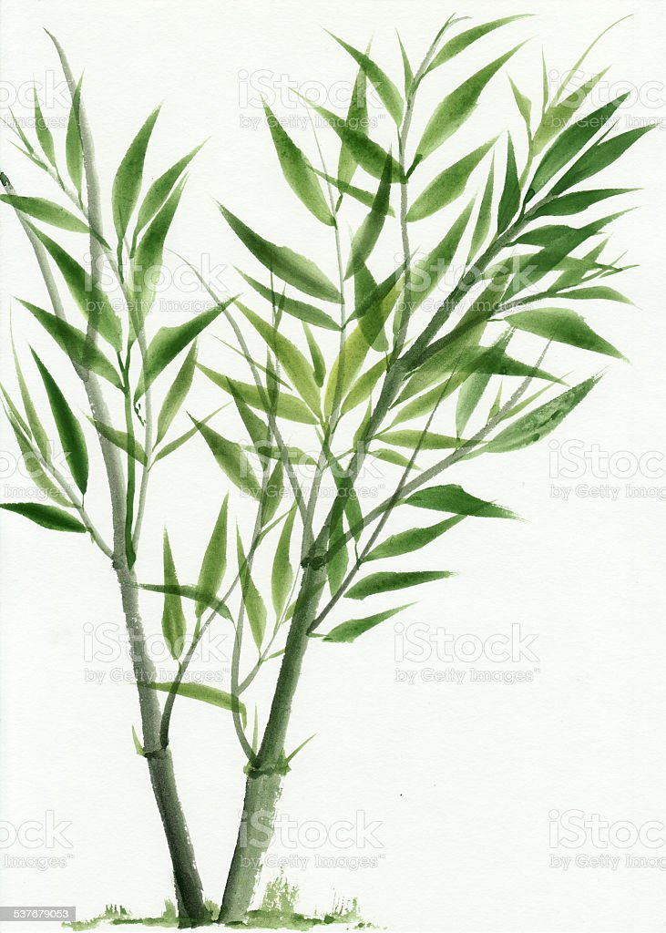 Young green bamboo vector art illustration