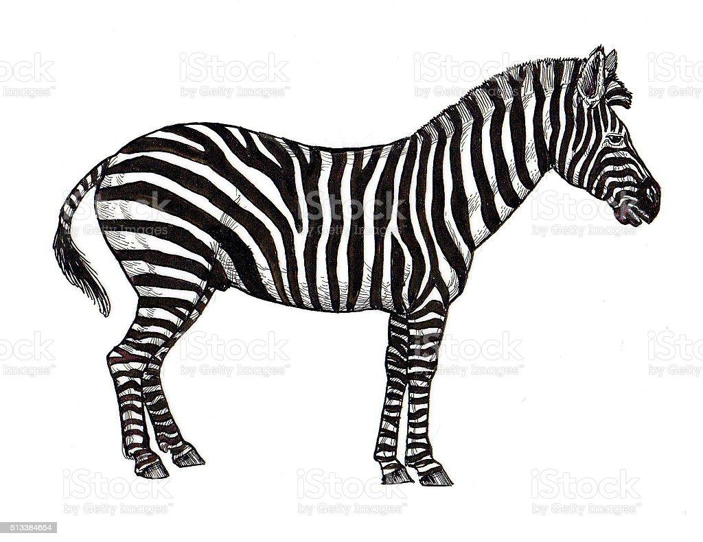 Zebra Lizenzfreies vektor illustration