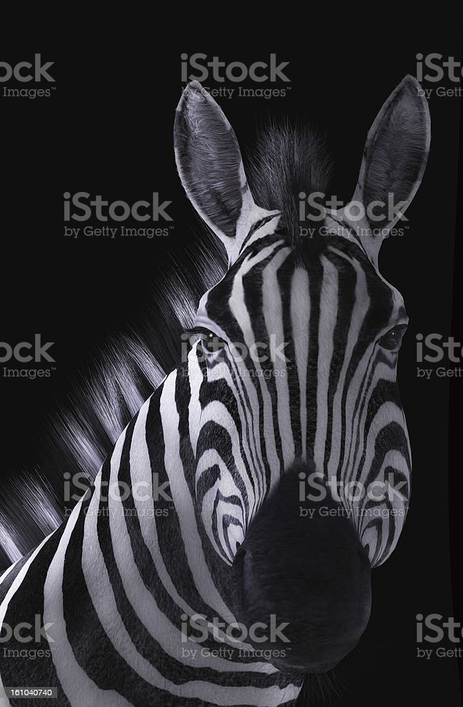 Zebra Portrait Black Background royalty-free stock vector art