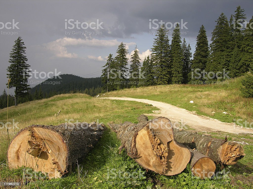 SAVE THE FOREST ! royalty-free stock photo