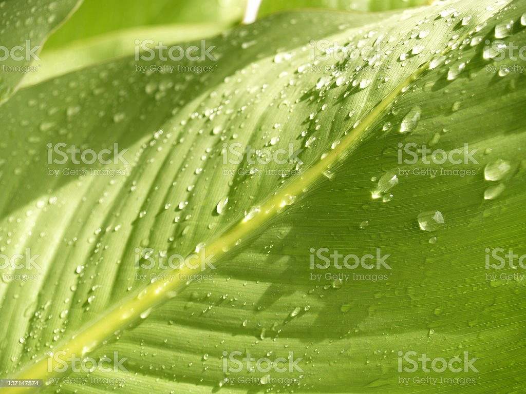 AMAZON RAINFOREST royalty-free stock photo