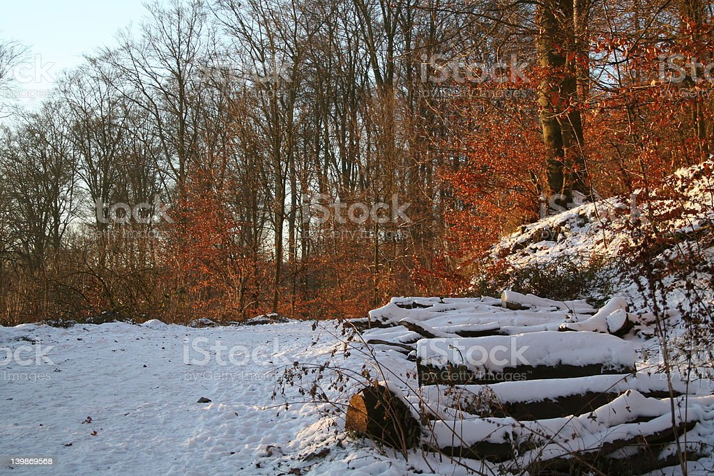 SNOWY LOGS royalty-free stock photo