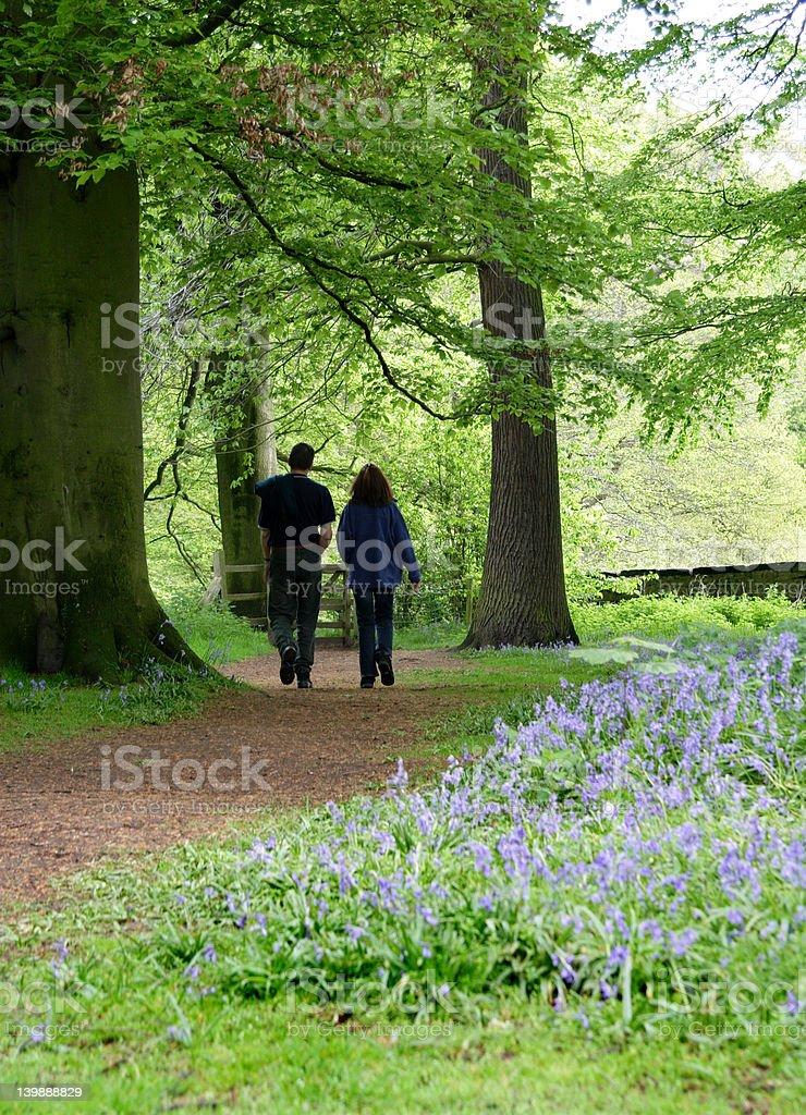 BLUEBELL WALK royalty-free stock photo