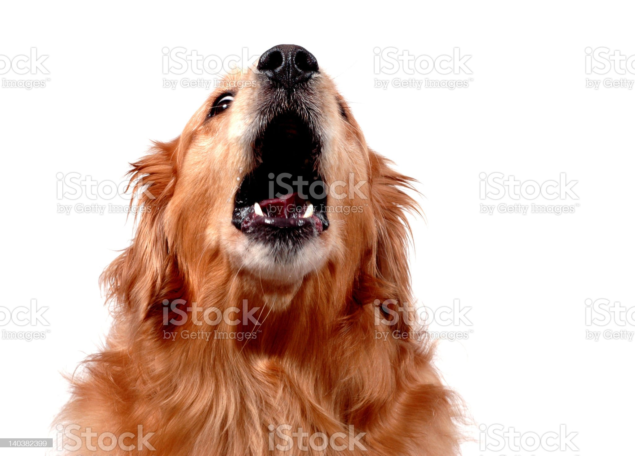HOWL! royalty-free stock photo