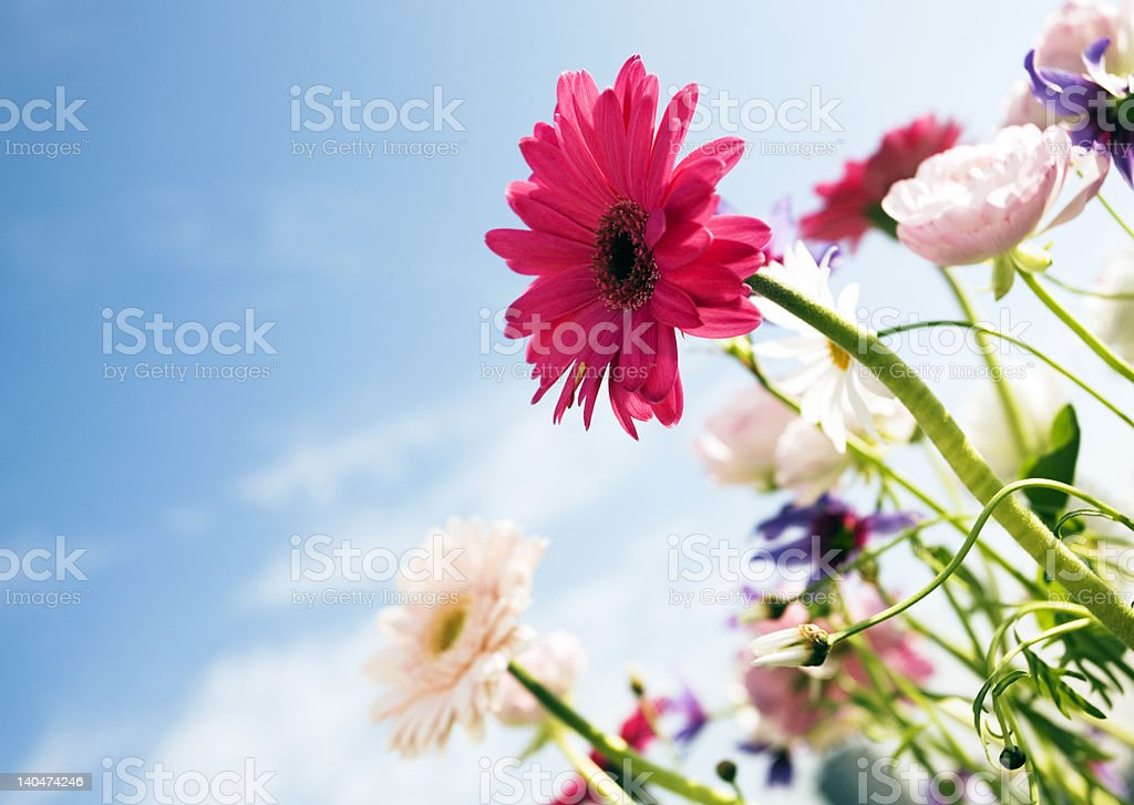 FLOWERS ELEGANCE royalty-free stock photo
