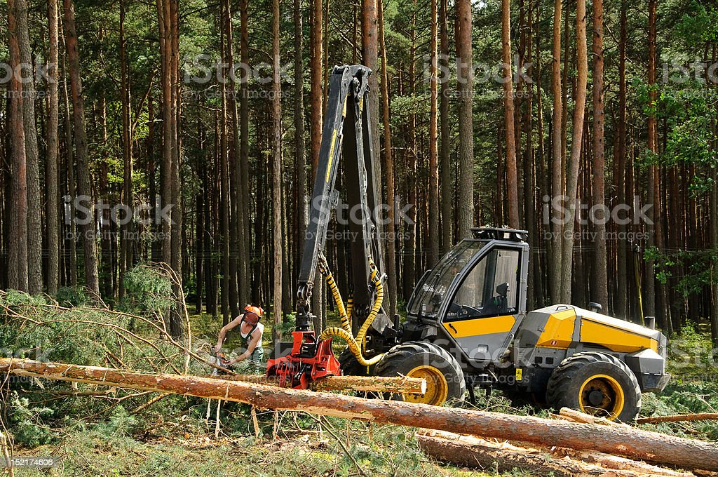 FOREST HARVESTERS royalty-free stock photo