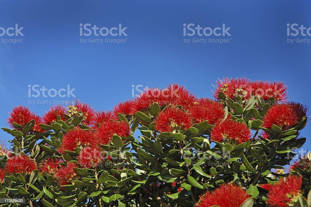 POHUTUKAWA FLOWERS LANDSCAPE royalty-free stock photo