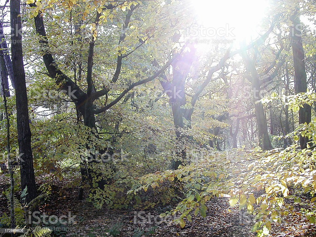 GREAT OUTDOORS 16 stock photo