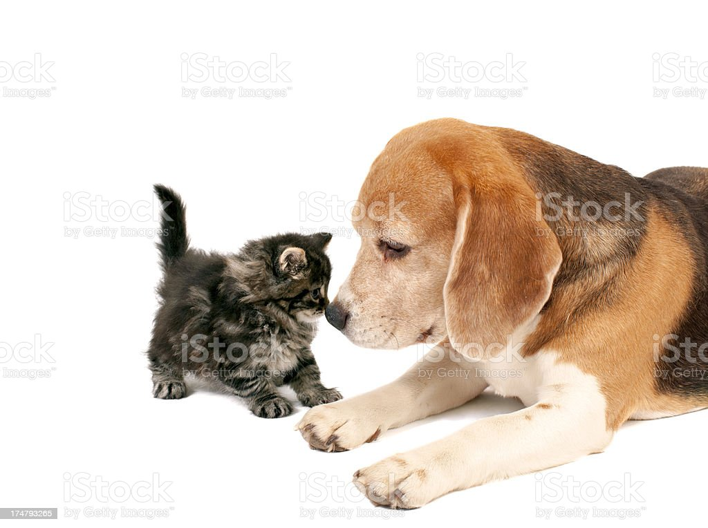 FRIENDSHIP. royalty-free stock photo