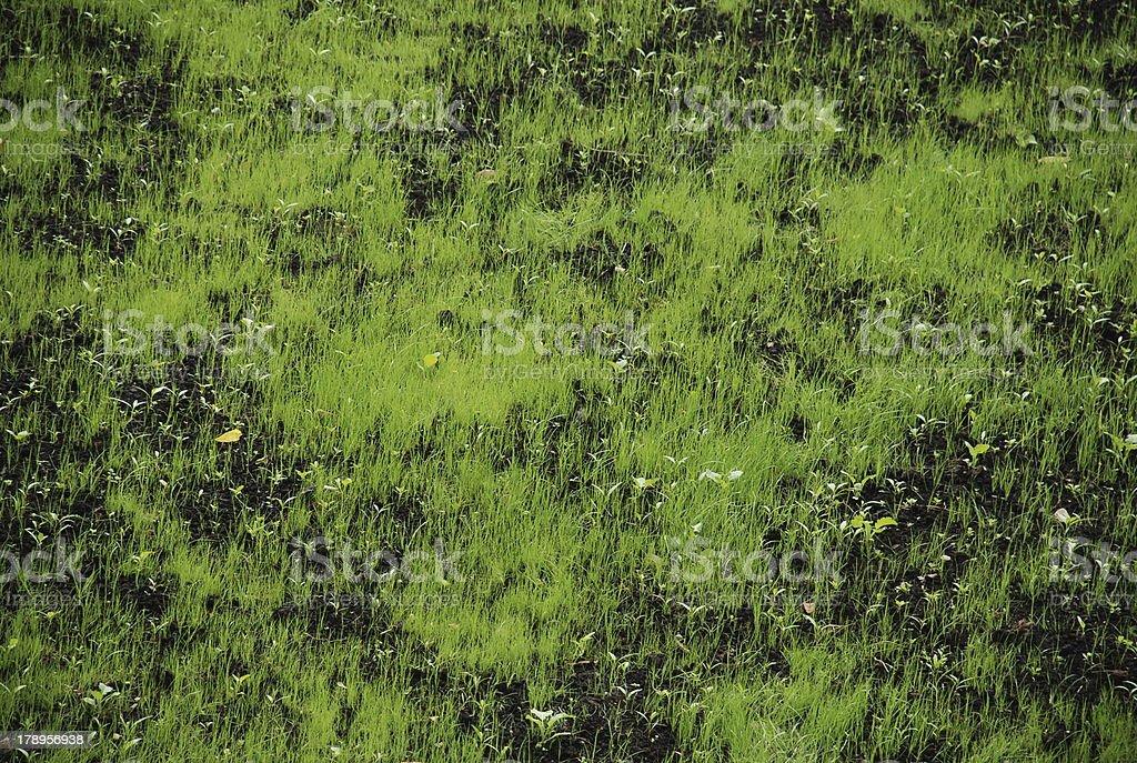 Зеленый газон royalty-free stock photo