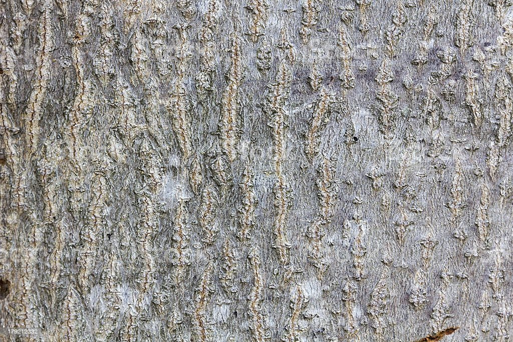GRUNGE WOOD TEXTURE royalty-free stock photo