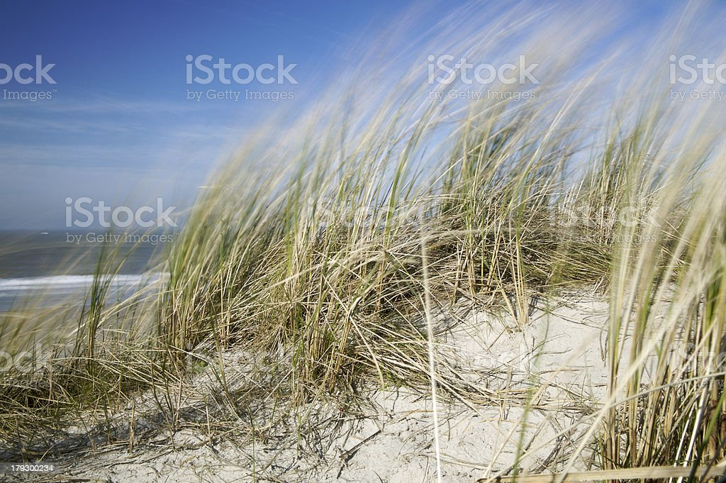 A34S7999 royalty-free stock photo