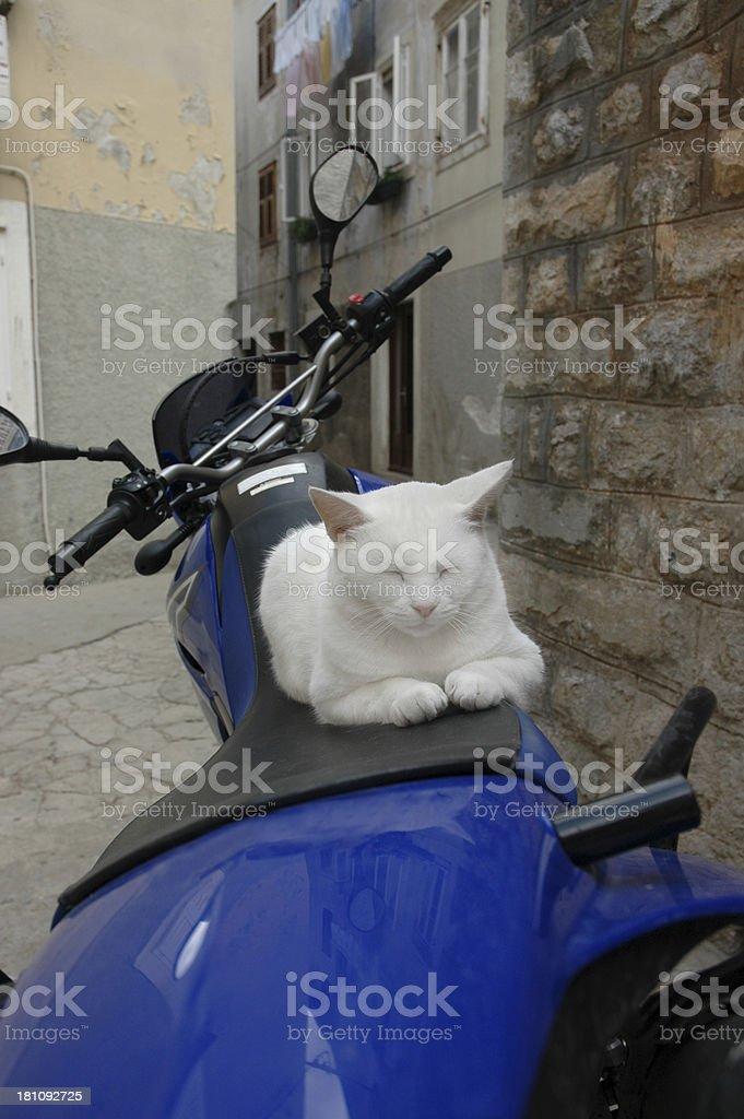 BIKER CAT 1 royalty-free stock photo