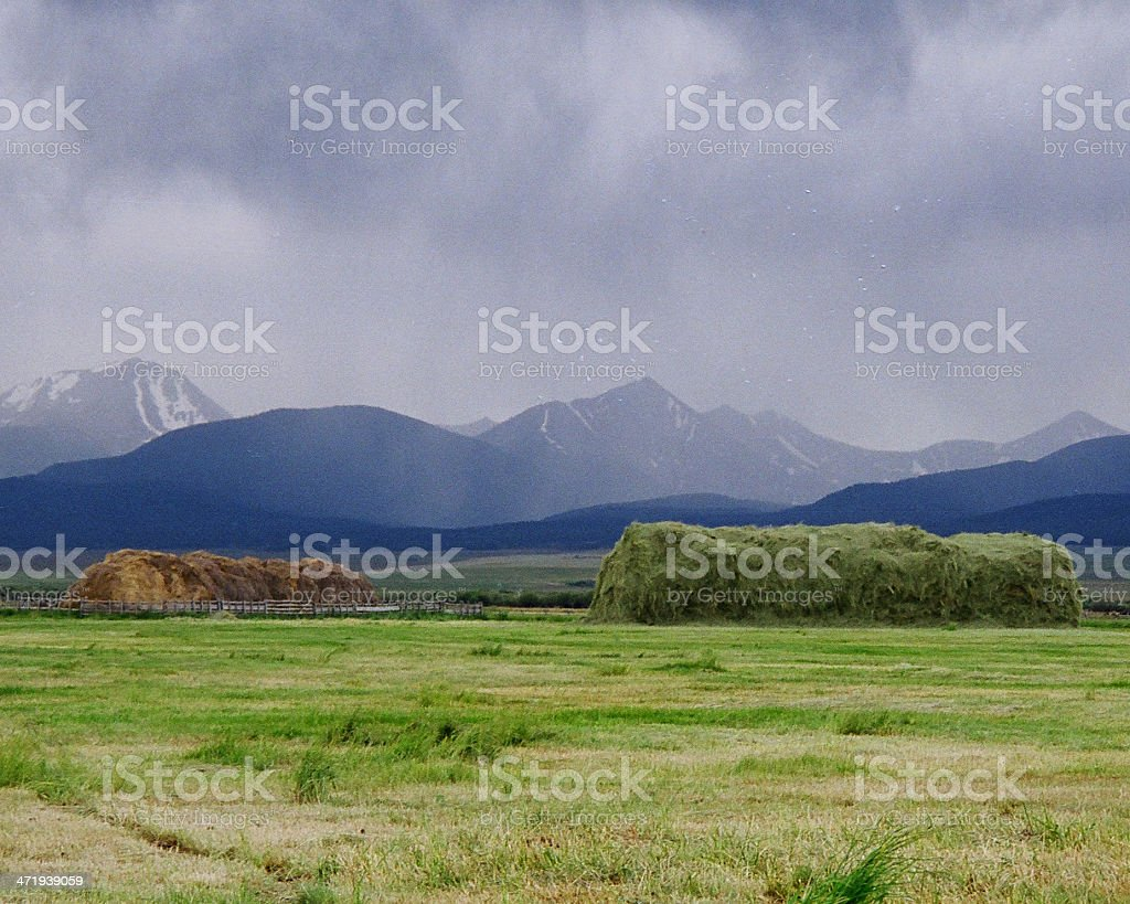 WILD HAYSTACKS IN MONTANA. stock photo