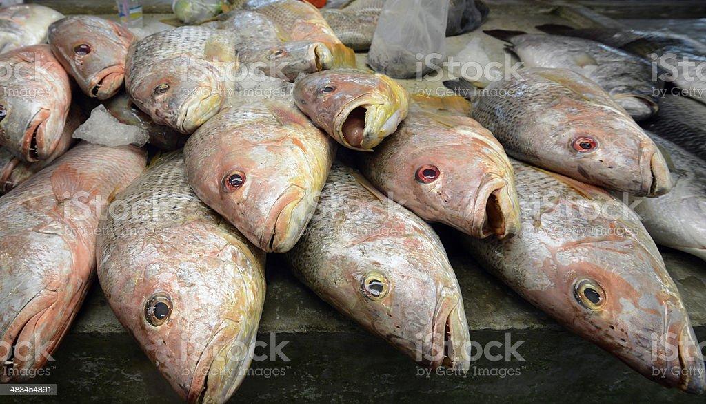 THAILAND PHUKET FISCHMARKET FISH stock photo
