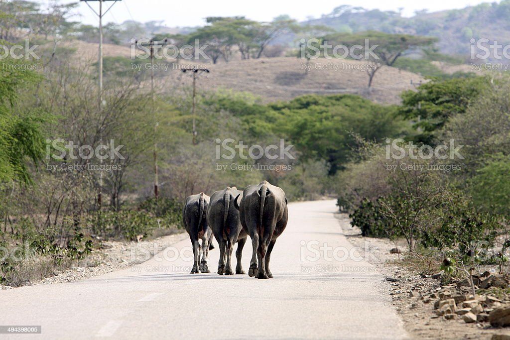 ASIA EAST TIMOR OLANDSCAPE ROAD AGRICULTURE stock photo