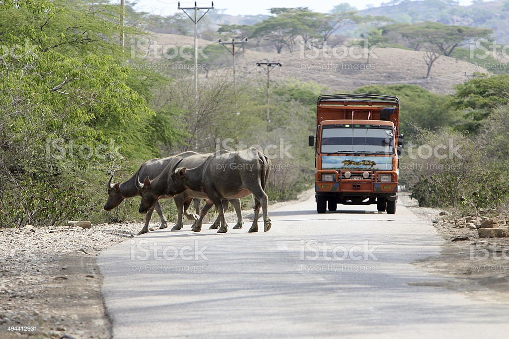 ASIA EAST TIMOR TRANSPORT AGRICULTURE stock photo