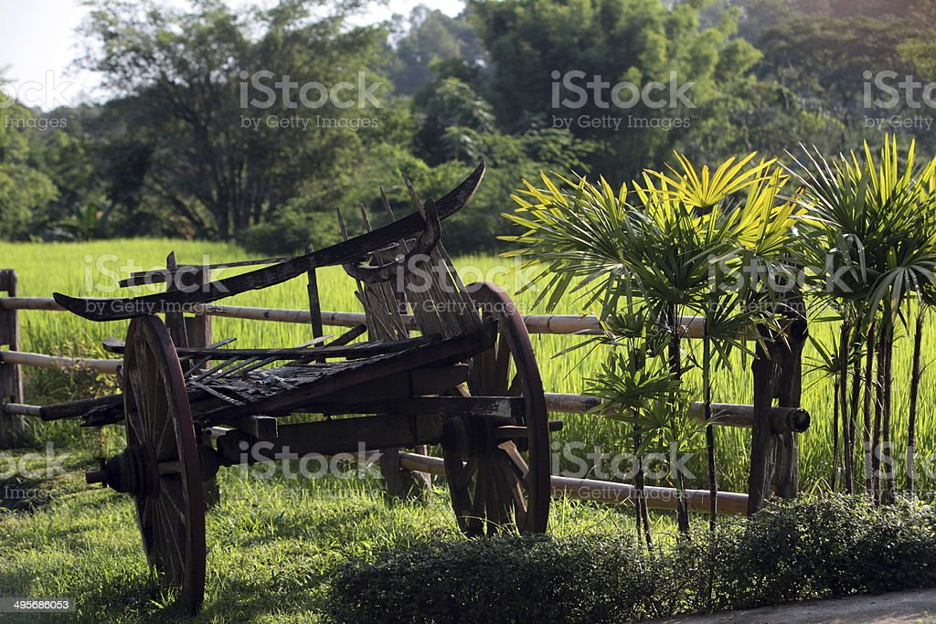 THAILAND CHIANG MAI CHIANG DAO FARMLAND stock photo