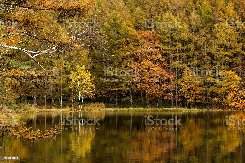 秋の御射鹿池 stock photo