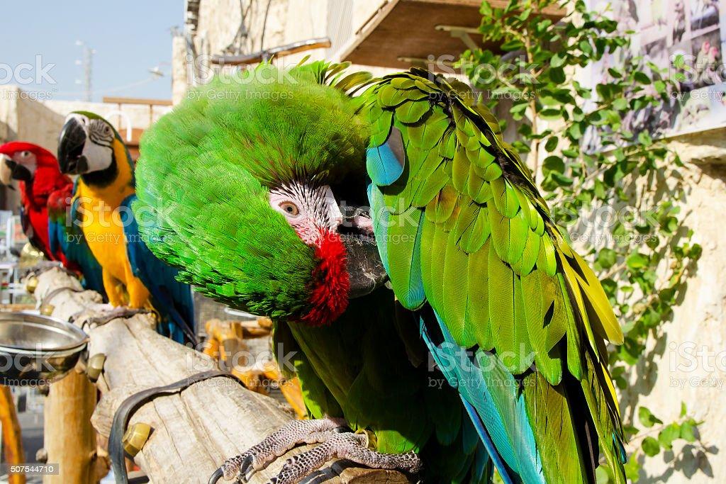 BIRD MARKET DOHA, QATAR stock photo