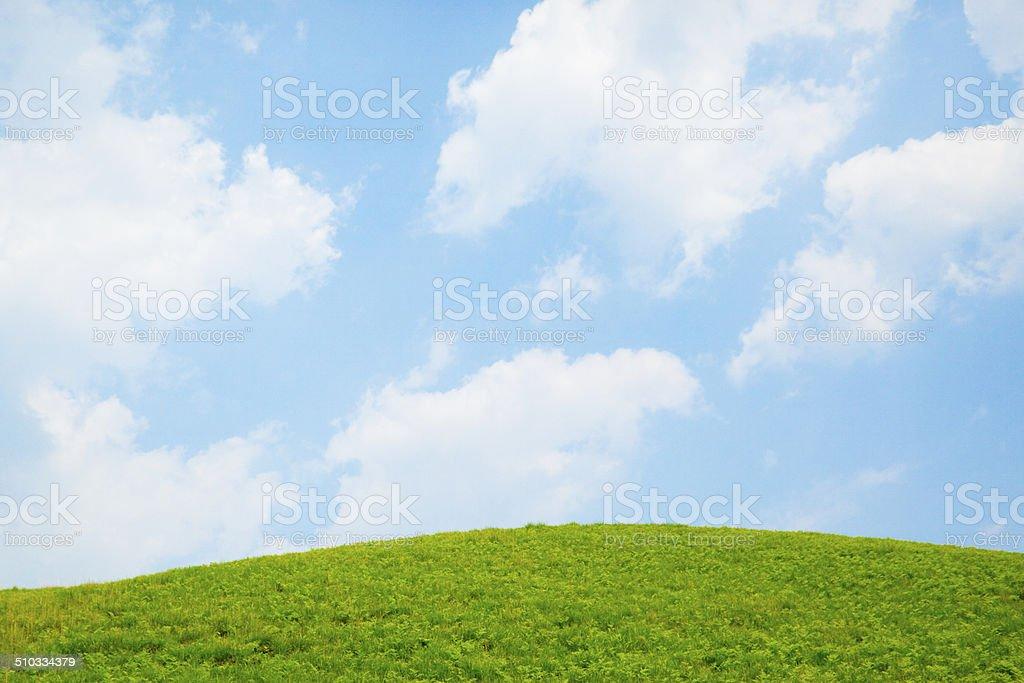 青空と初夏の草原 stock photo
