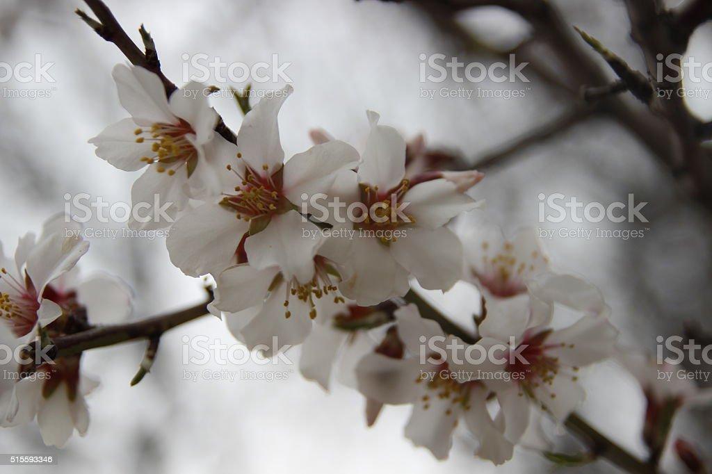 SPRİNG stock photo