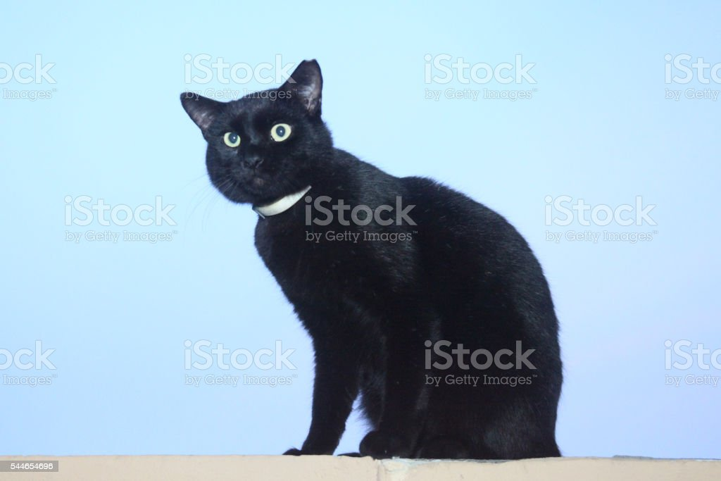 CAT ON WALL stock photo