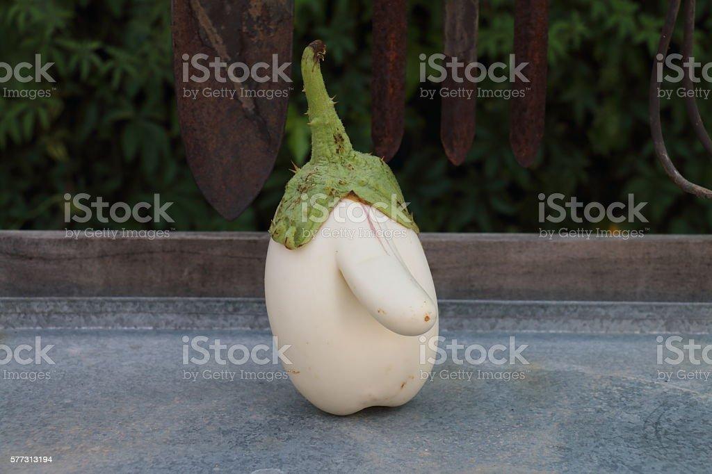 WHITE EGGPLANT WITH A BIG NOSE. IMAGE CENTEREDA WHITE EGGPLANT WITH A BIG NOSE. IMAGE CENTERED stock photo