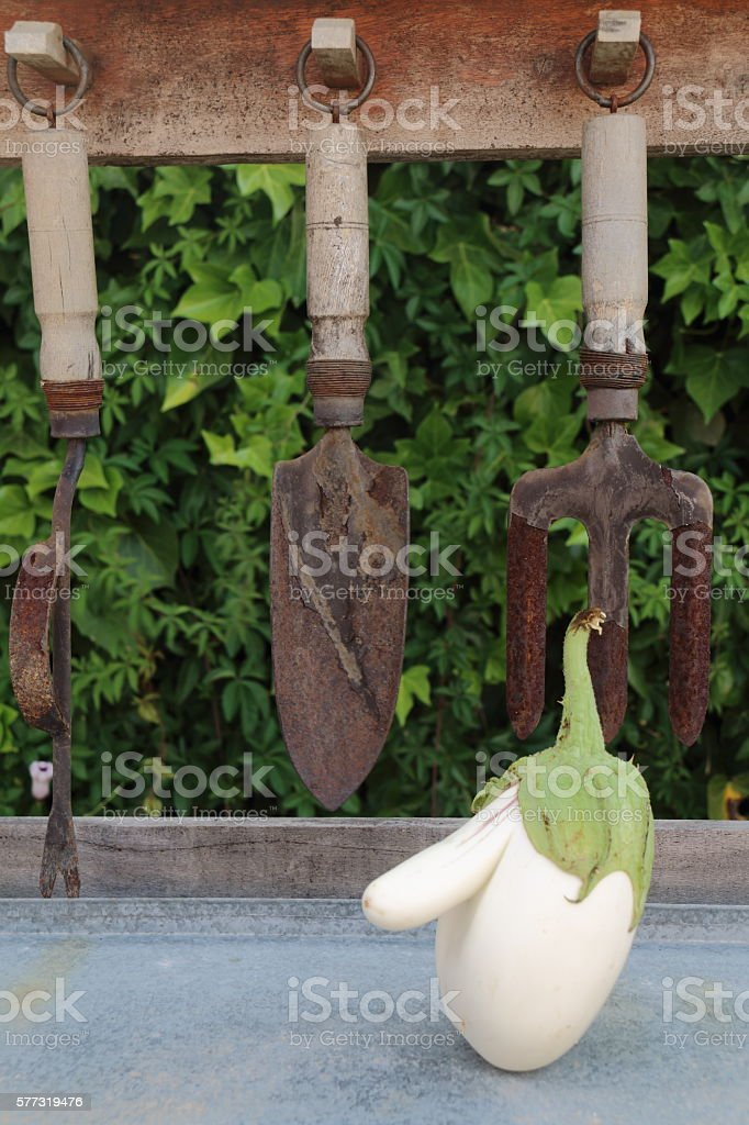 WHITE EGGPLANT WITH A BIG NOSE. PICTURE RIGHT SIDE VERTICAL stock photo