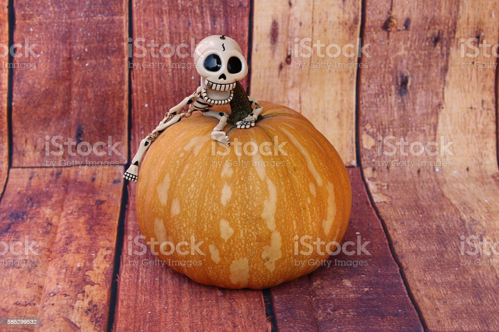 SKELETON FUNNY LAUGHING RISEN UP A PUMPKIN stock photo