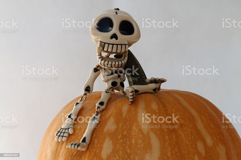 SPOTLIGHT A FUNNY LAUGHING SKELETON RISEN UP A PUMPKIN stock photo