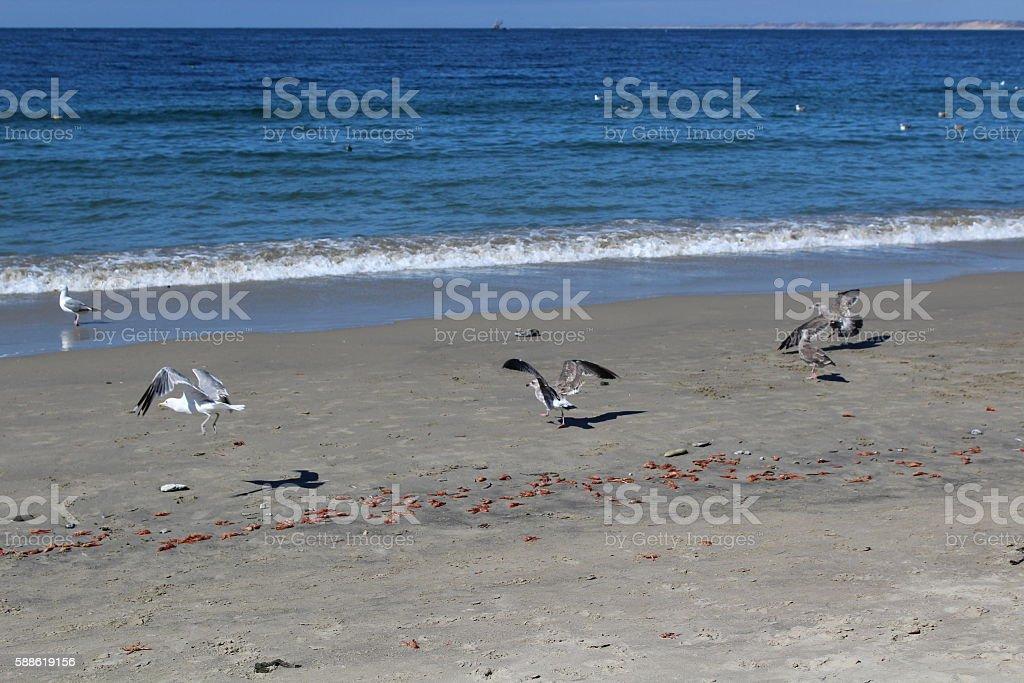 BEACH SEAGULLS stock photo