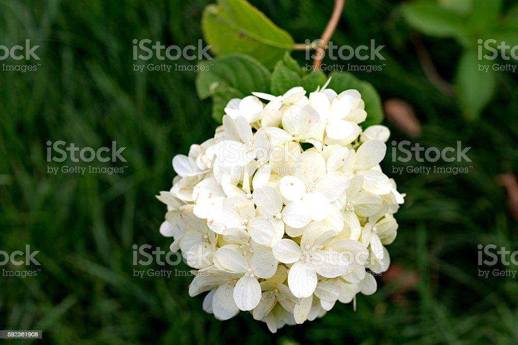 цветок stock photo