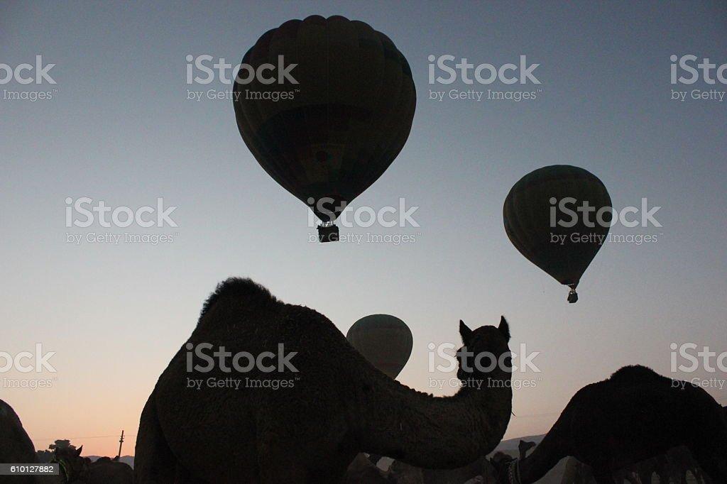 CAMEL AND HOT AIR BALLOONS AT PUSHKAR CAMEL FAIR IN RAJASTHAN stock photo