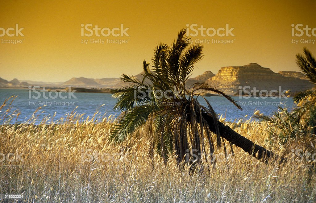 AFRICA EGYPT SAHARA SIWA OASIS stock photo