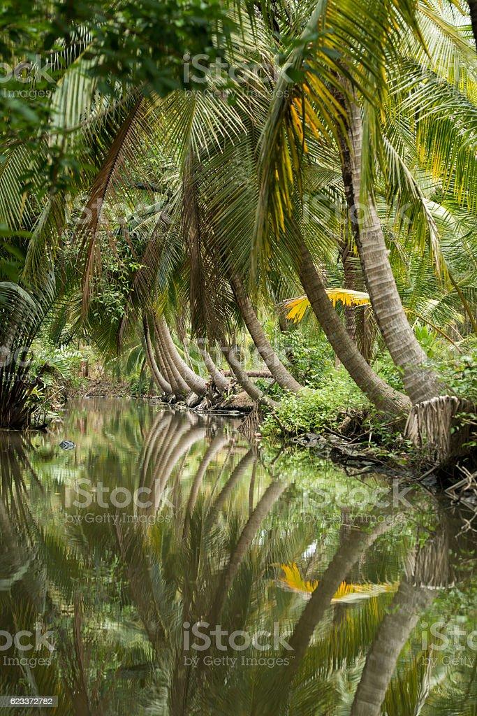 ASIA THAILAND SAMUT SONGKHRAM NATURE stock photo