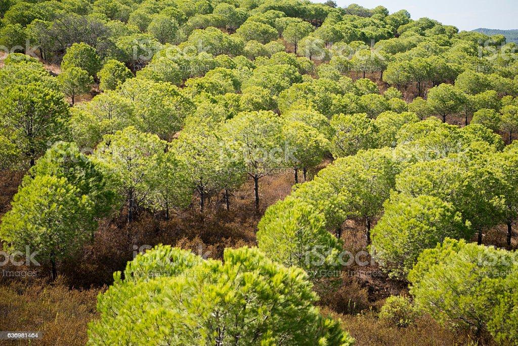 EUROPE PORTUGAL ALGARVE RIO GUADIANA FOREST stock photo