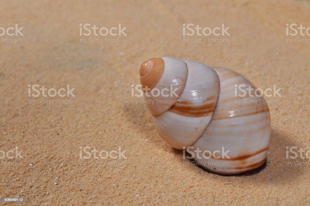 BEACH WINKLE stock photo