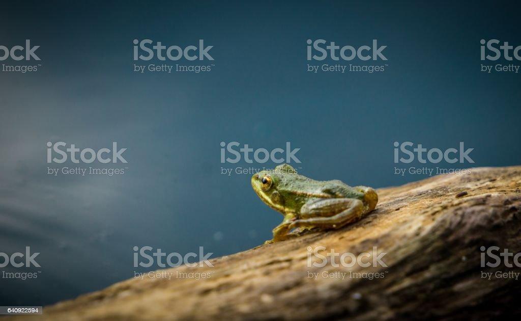 Маленький лягушонок на берегу озера stock photo