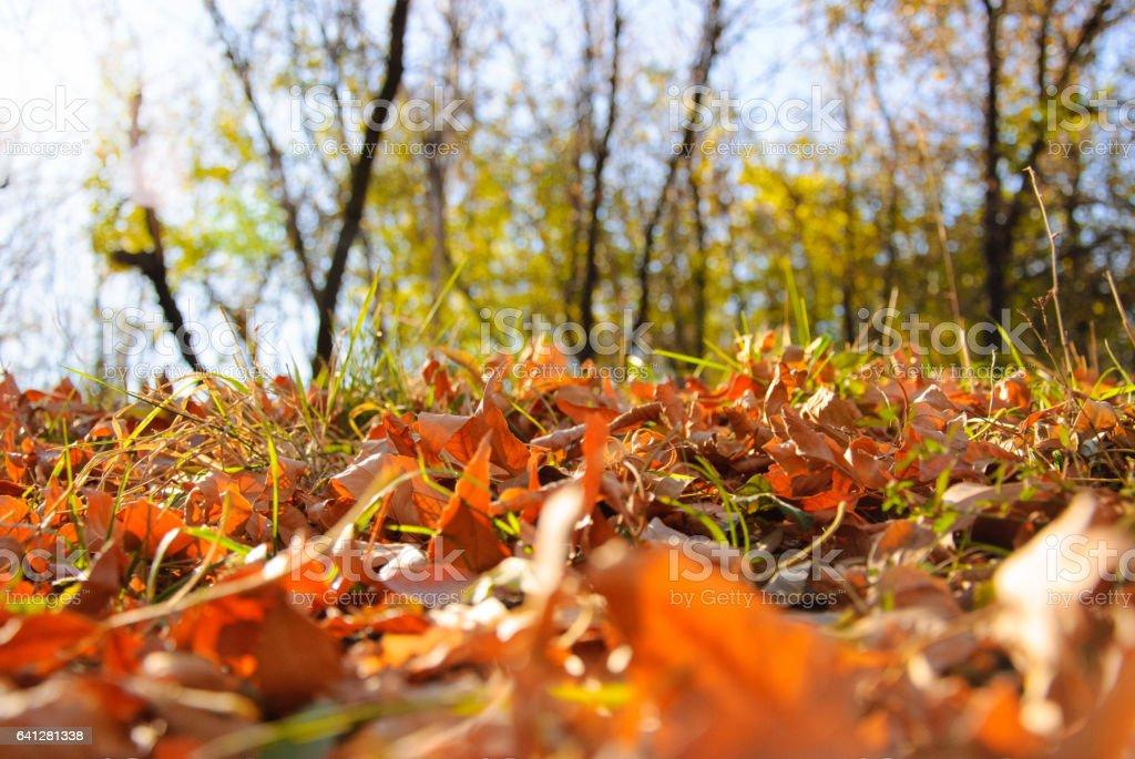 осенние листья в лесу stock photo