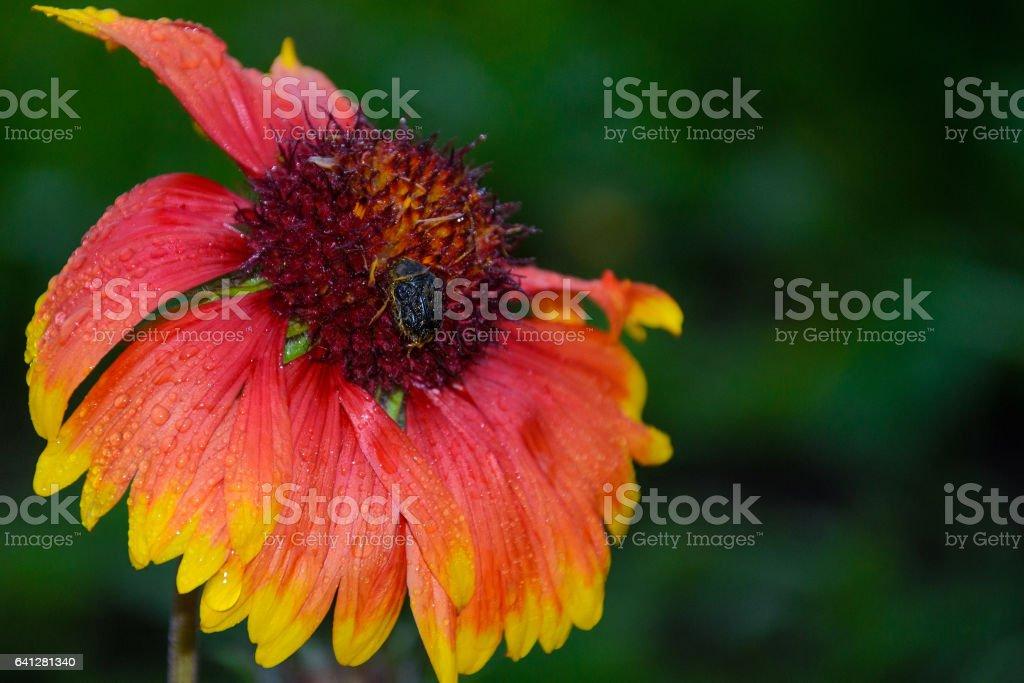 бутон цветка stock photo