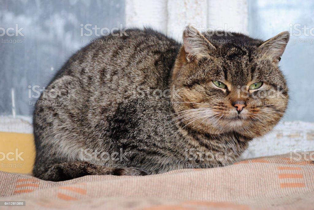толстый кот stock photo