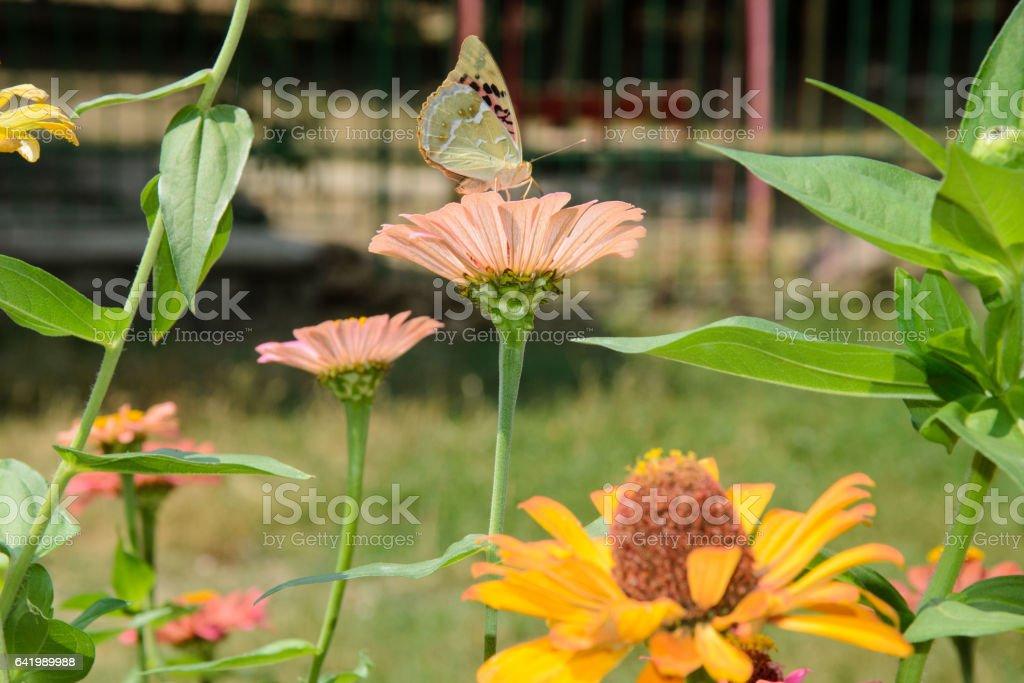 бабочка на цветке stock photo